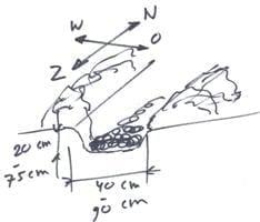 asperge tekening 1