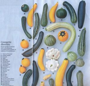 RHS The Garden Courgettes - overzicht groot