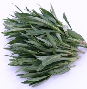 risotto met blaassilene - bosje groen
