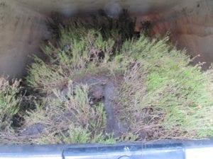 Heide in de Eetbare Siertuin - een wagen vol geladen