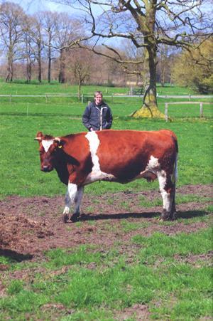 Eten uit de Buurt - de boer en zijn koe