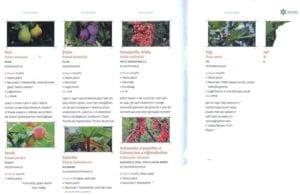 Een kleine eetbare tuin - fragment plantenlijst