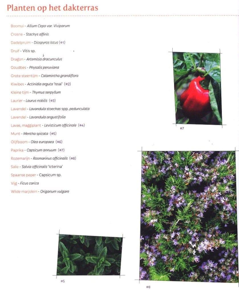 Een kleine eetbare tuin - plantenlijst dakterras