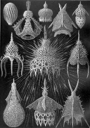 Kunstformen der Natur: straaldiertjes / Cyrtoidea