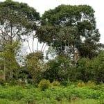 Voedselbossen – de zin en de onzin