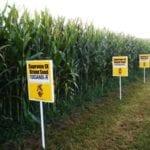 BIO vs GMO