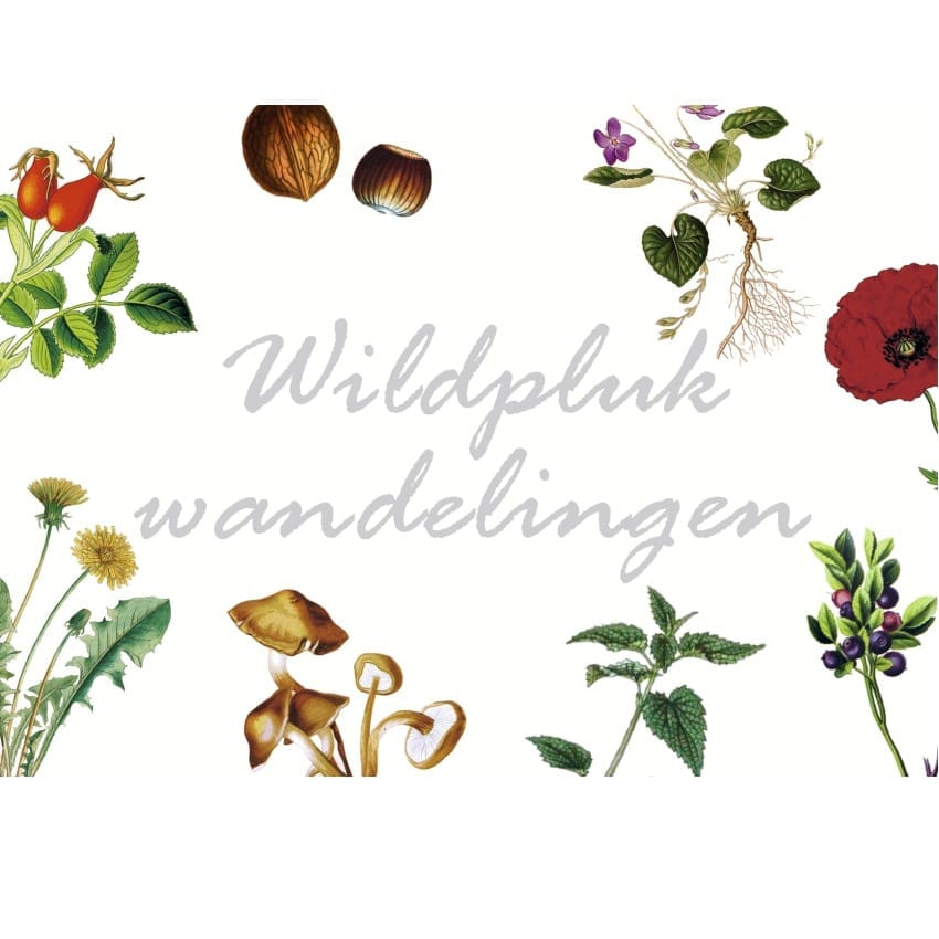 Wildplukken met Miss Wildpluk – Herfstwandeling