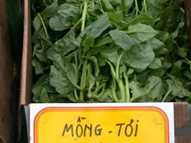 http://www.worldcrops.org/images/content/malabar_spinach_at_Dorchester_farmers'_market_-_440_by_265.JPG