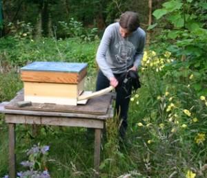 Bijen komen uit de kast - Saskia maakt vlieggat vrij