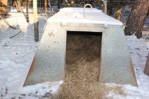 Varkens in de kou - hok met stro