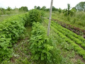 Eetbare bostuin - Samenland randen en hagen