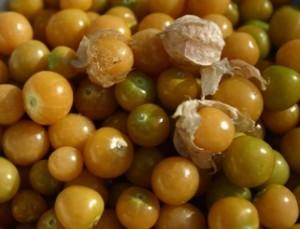 Ground cherry - cherries