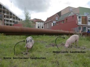 Tilburg houdt niet van varkens 2