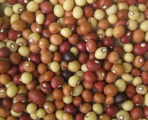 Meest belangrijke groenten bedreigd - bambara aardnoot