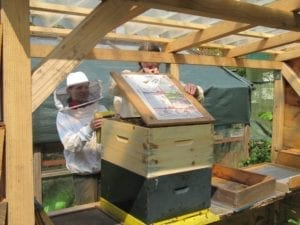 Koningin zoeken op Koningsdag - bijenkast wordt geopend (Custom)
