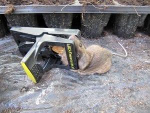 muisgehouden muis (Custom)