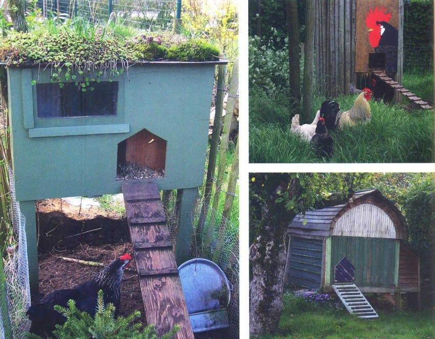 Kippen in de tuin - hokken (Custom)