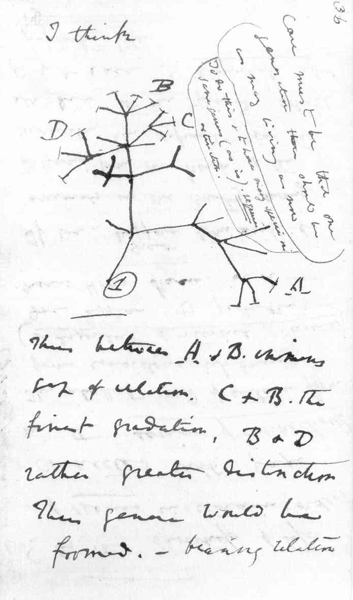 darwin_tree[1]