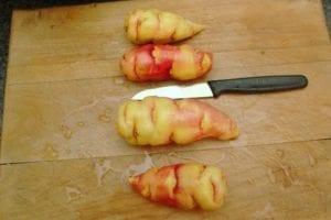 Koken met knolcapucien of mashua [1]