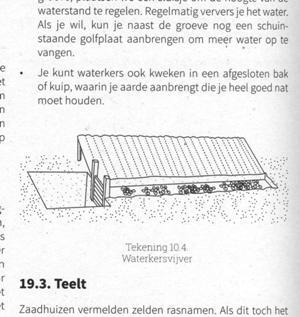 Voorbeeld plantbeschrijving - waterkers illustratie 300x317