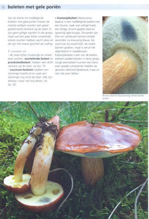 Eetbare paddenstoelen - kastanjeboleet