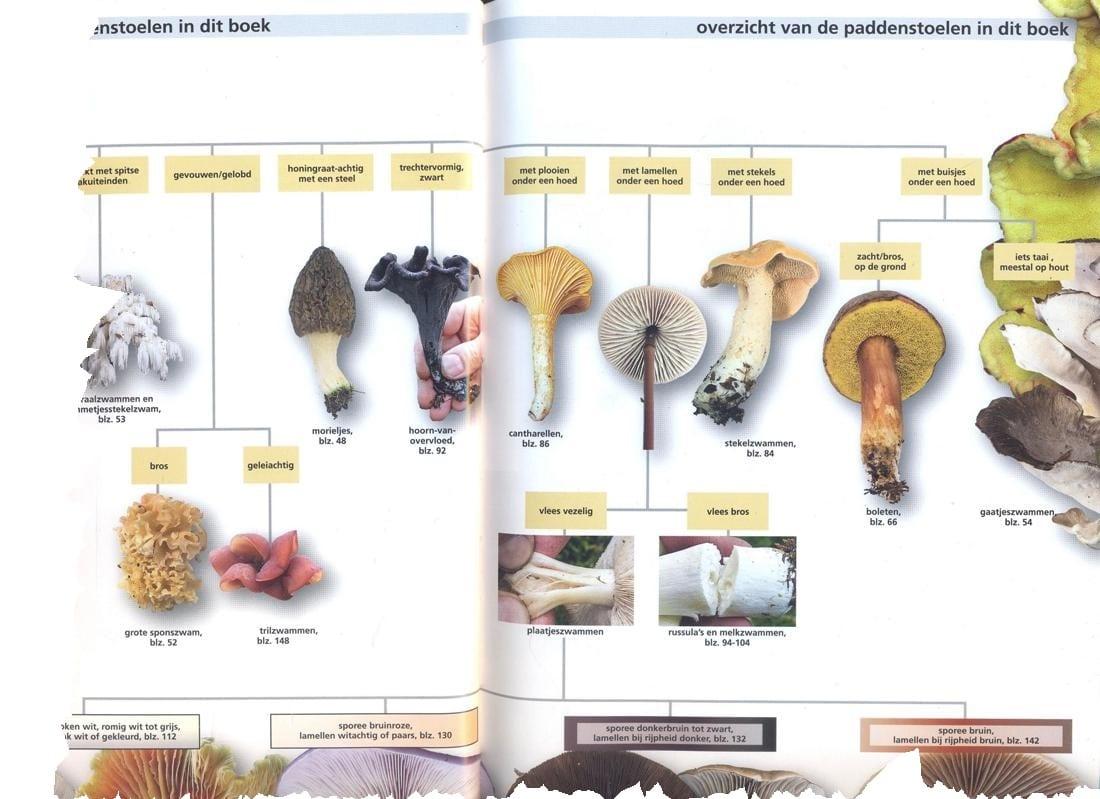 Eetbare paddenstoelen - overzicht