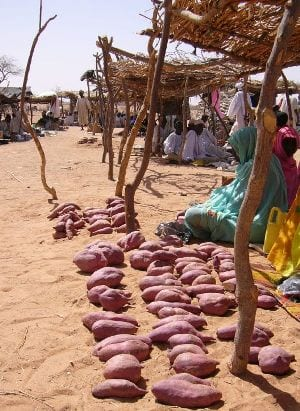 Zoete aardappel in een vluchtelingenkamp in Tsjaad, door-Mark-Knobil, Wikimedia Commons