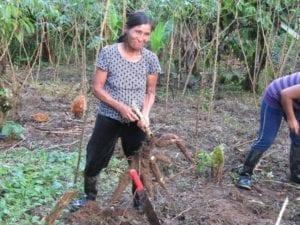 Het lichtende voorbeeld. In het Amazonewoud van Ecuador.