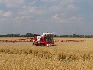 Haver wordt voor de oogst nog een keer bespoten - Foto: David Hawgood, Wikicommons