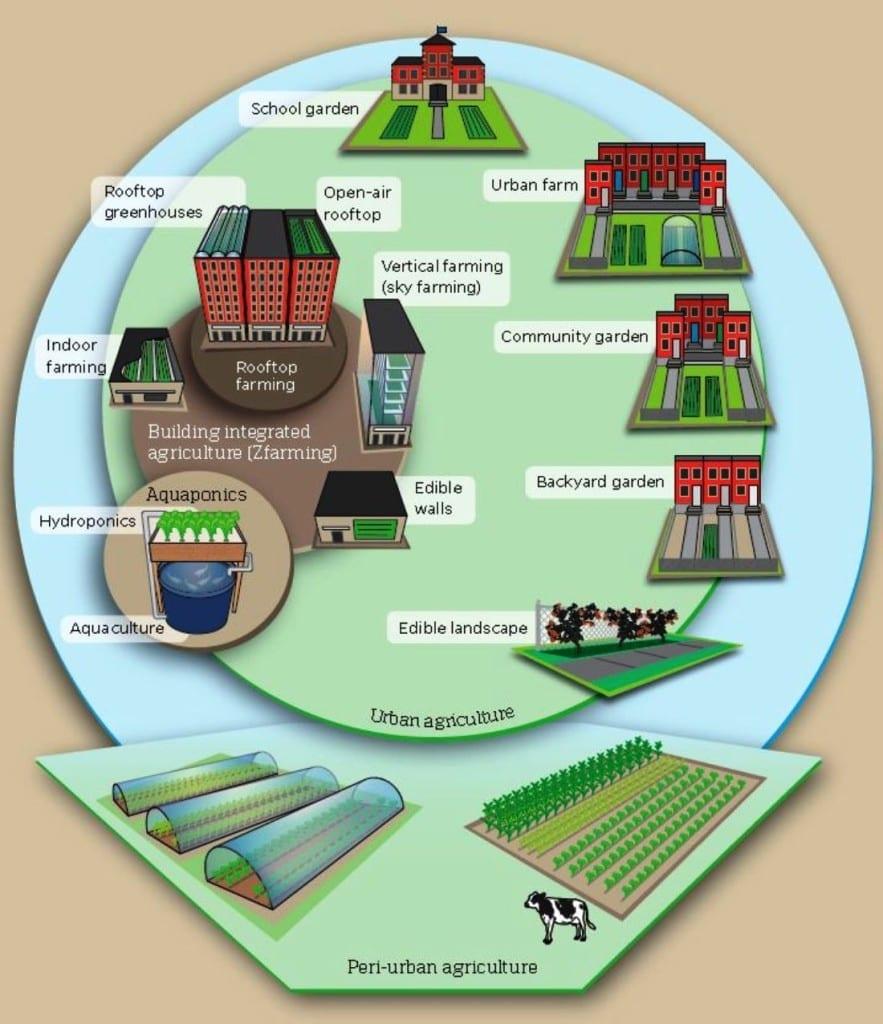 Stadalandbouw - Vacant lots to vibrant plots - afbeelding stadslandbouw