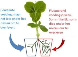 Ook planten schatten kansen in - Schema 2