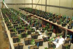Ook planten schatten kansen in - opstelling