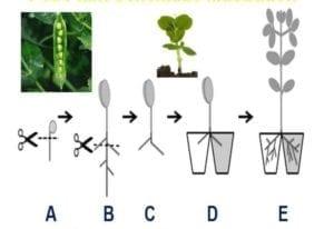 Ook planten schatten kansen in - schema 1