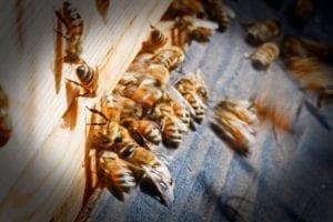 Bijensterfte - bijenkast - Niels Volkmer - Flickr