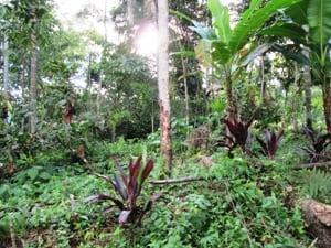 Voedselbossen - Ecuador Amazone