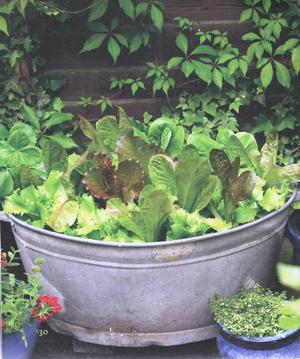 tuin-smakelij-potten-en-bakken