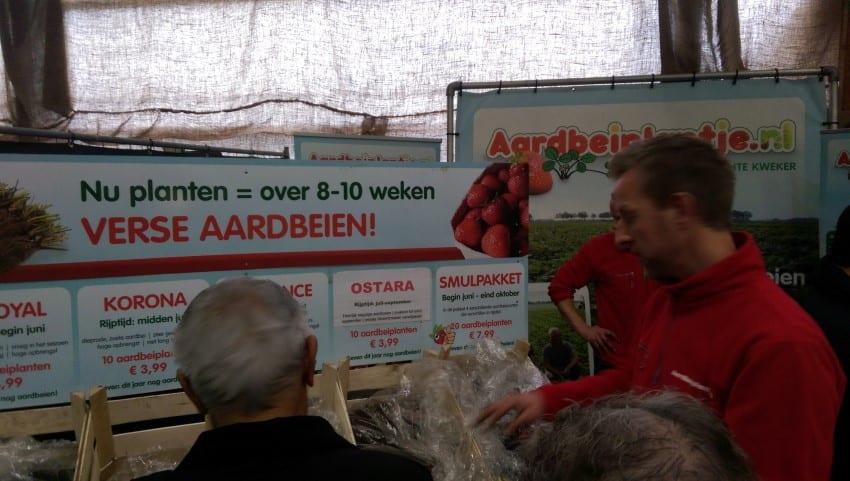 Groenmoesmarkt 2017 – aardbeienplanten