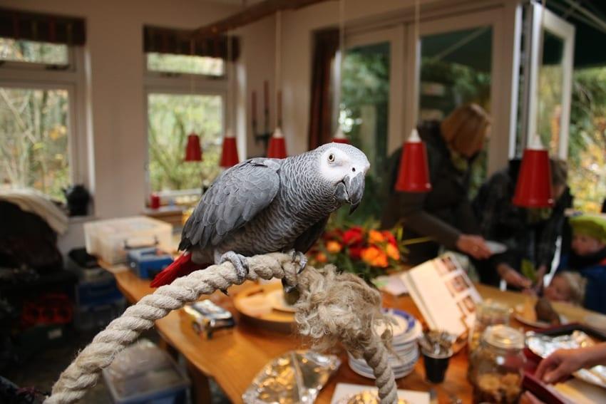 MergenMetz – Winterse Sferen – Papegaai