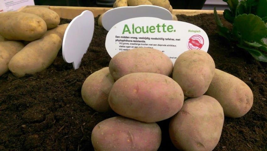 BIO Beurs 2018 – aardappel