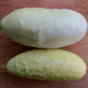 Vruchtgewassen (komkommer, mais e.d.)
