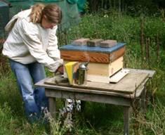 Bijenkastcontrole 1.jpg
