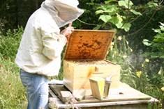Bijenkastcontrole 2.jpg