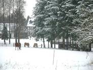 Eifelhof winter.jpg