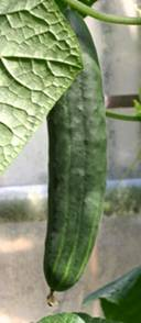 Buitenkomkommer - King of the Ridge Fruita Fall.jpg