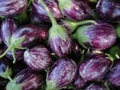 aubergine - rond wit-paars.jpg